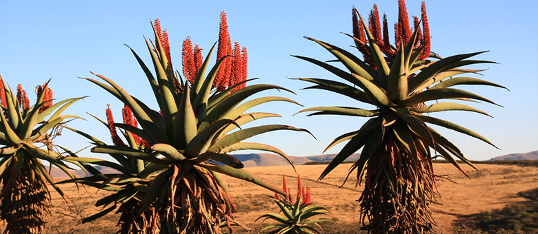 Grahamstown Info, Eastern Cape, South Africa, www.grahamstown-info.co.za, Accommodation, Activities